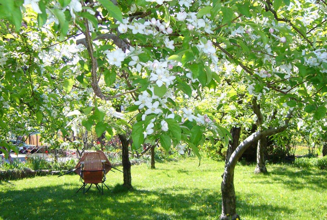 im Apfelgarten